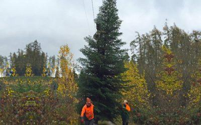 10. Dezember und 17. Dezember: Christbaumschlagen im Herzoglichen Forst Callenberg
